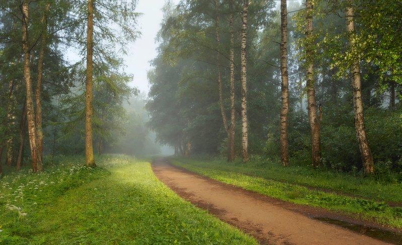 пейзаж, природа, рассвет, туман В лето. . .photo preview