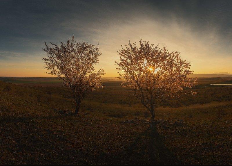 Сладковатый запах цветущего миндаля на рассвете невероятен.photo preview