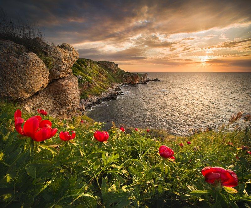 bulgaria, yailata, black sea, peonies The wild nature of Bulgariaphoto preview