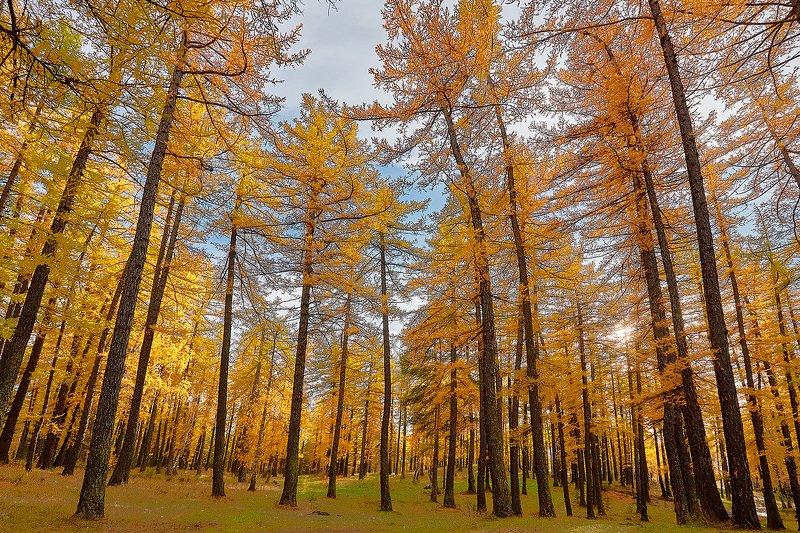 южный, урал, долгие горы, орск, новотроицк башкирия талкас Золото Осени.photo preview
