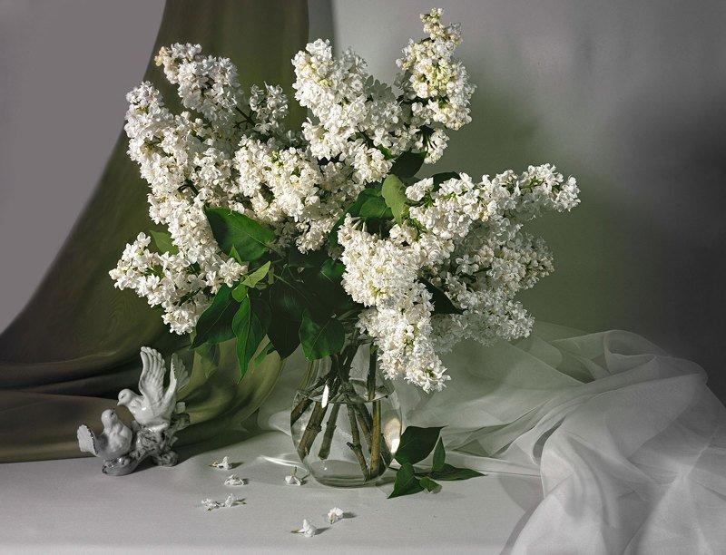 натюрморт, белая сирень, букет, голубки, статуэтка, кувшин, цветы Белая сиреньphoto preview
