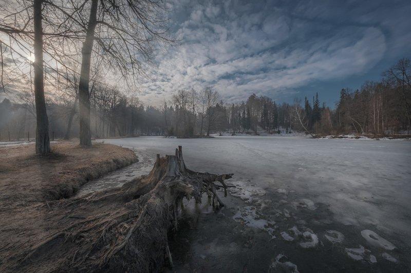 середниково, барский, пруд, утро, туман, солнце, рассвет, деревья, весна, апрель Ранний апрельphoto preview