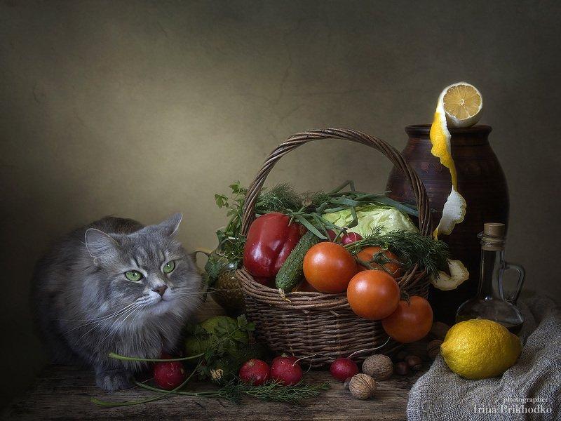 натюрморт, котонатюрморт, кошка Масяня, овощи, винтажный натюрморт - А где мясо?photo preview