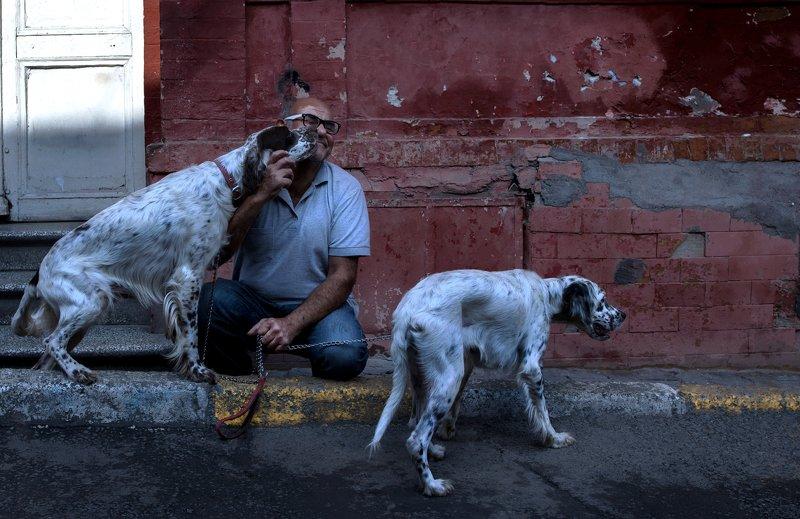 street dogs köpekleri seviyorumphoto preview