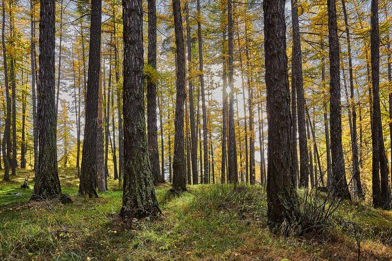 южный, урал, долгие горы, орск, новотроицк башкирия талкас Стояли строгими рядами...photo preview