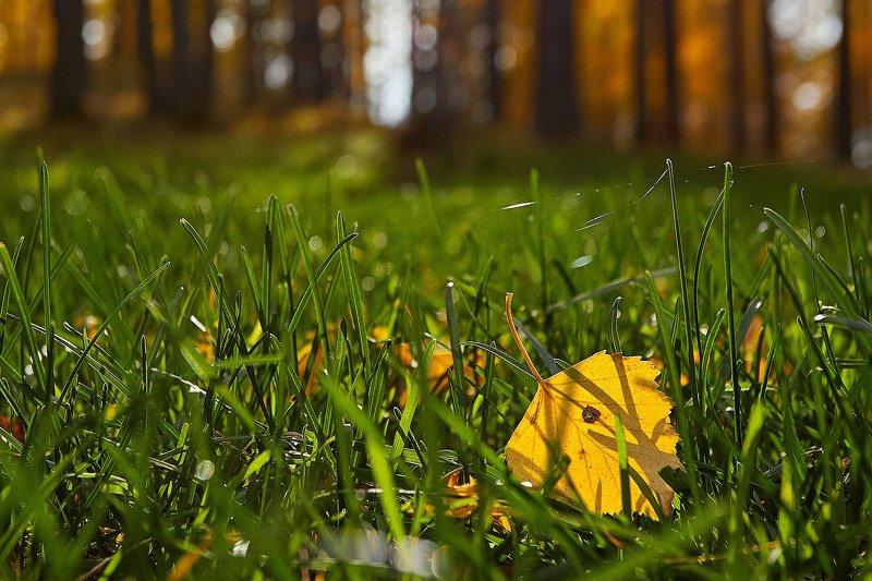 южный урал, орск, башкирия, алтай, алтайский край, ледник, актру, новотроицк, губерля, просто, осень, весна, лето, зима, холод, жара, ***photo preview