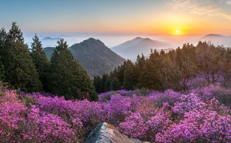 mountains,peak,hiking,fog,spring,blossom Morning of Cheonjusanphoto preview