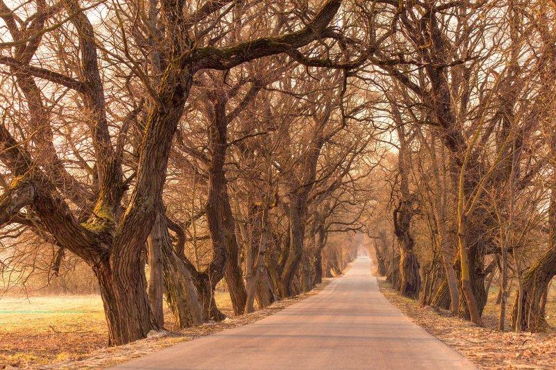 апрель, беларусь, весна, дорога, рассвет, утро Стары шлях да маёнткаphoto preview