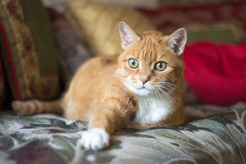 животные,кузя,рыжий,кошки,коты,любимцы,питомцы, Я соскучился по вам...photo preview