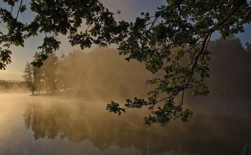 утро, лето, туман, природа, пейзаж, озеро новое Под пологом утренней дубравыphoto preview