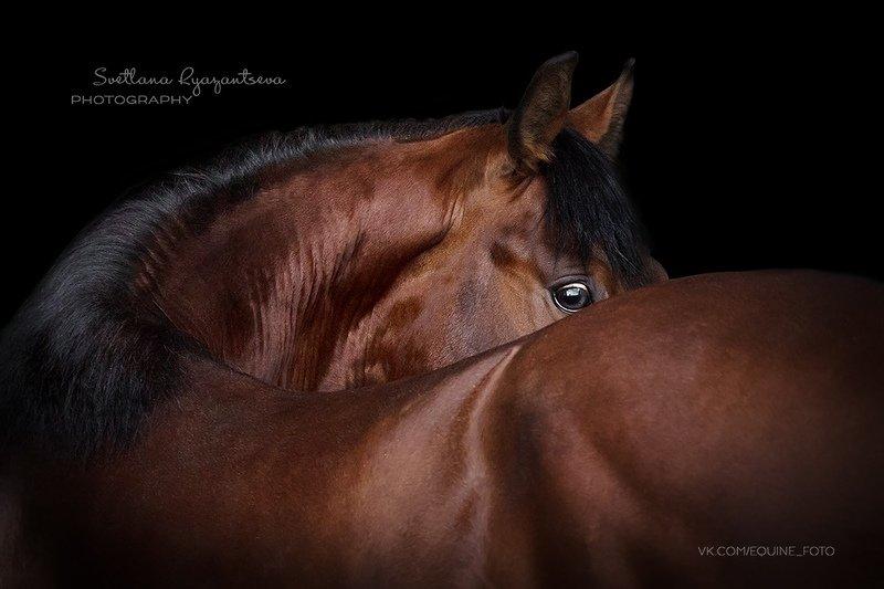 horse, лошадь, лошади, portrait Precious Heartphoto preview