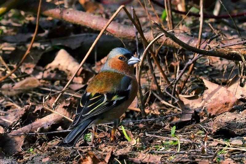 птицы ***photo preview