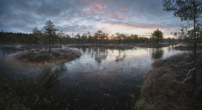болото, лёд, утро, сосны, восход, рассвет Рассвет над замёрзшим болотомphoto preview