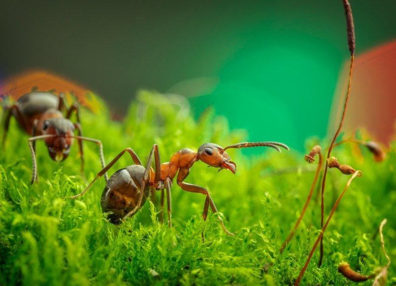 макро, муравей, Из жизни муравьёвphoto preview