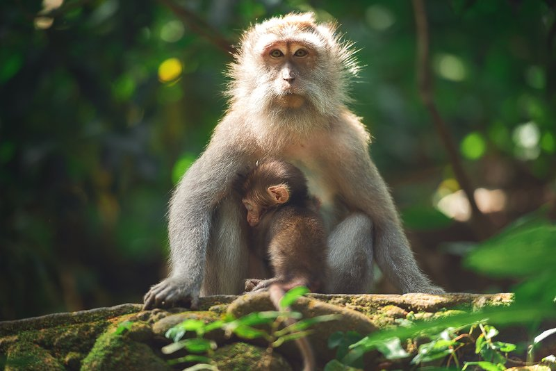 Мать с малышомphoto preview