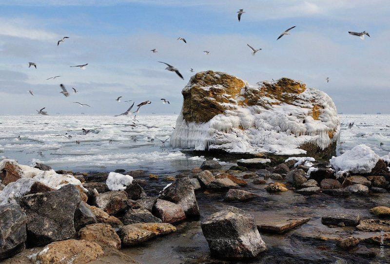 одесса, зима, снег, море, чайки Морозное море...photo preview