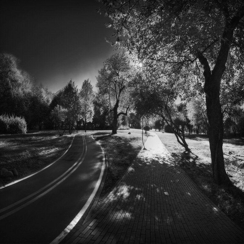 велодорожка, парк, победы, пешеходная, свет, тень | Double Ways |photo preview