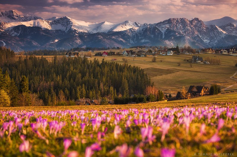 landscape, tatry, tatras. mountains, poland, polish, travel, explore, awesome, amazing, adventure, colours, spring, crocuses Springtime in Polandphoto preview