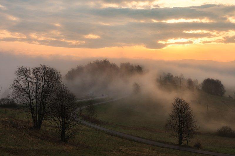 morning,fog,mist,landscape,sunrise,clouds,trees,spring Foggy morningphoto preview