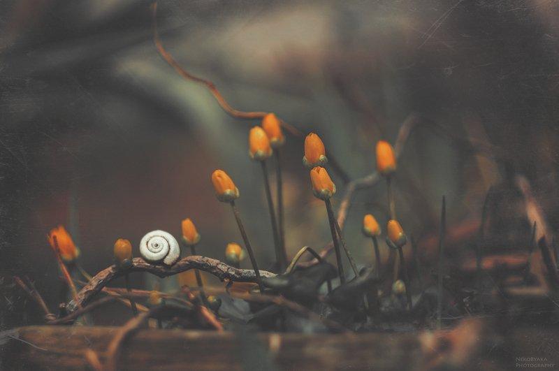макро, природа, цветы, чистяк, улитка, весна, macro, nature, flowers, snail, spring, Пасмурная веснаphoto preview