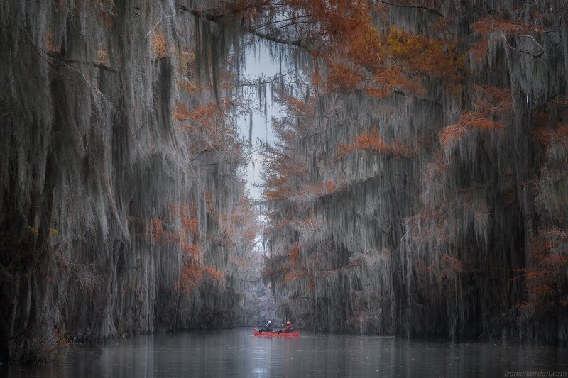 США Кипарисовые болота Техасаphoto preview