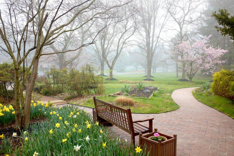 туман перспектива Ну, вот и веснаphoto preview