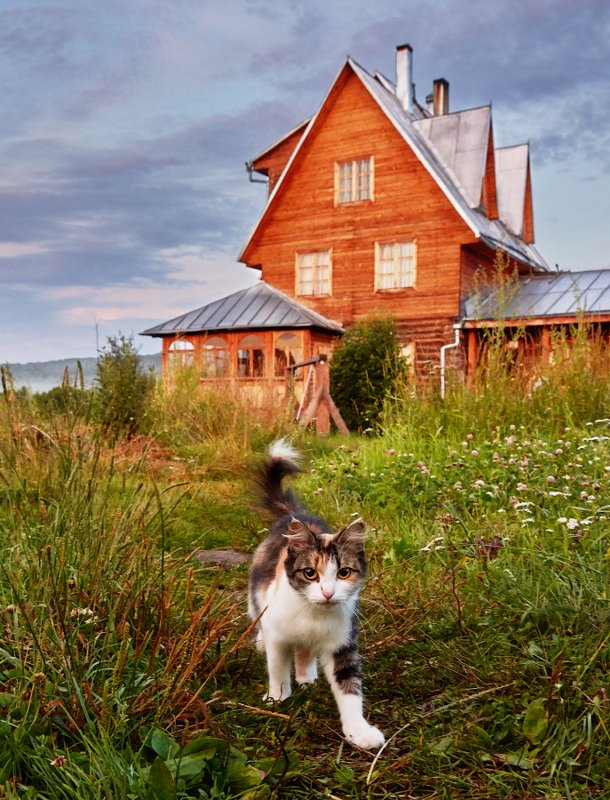 коты Деревенские котыphoto preview