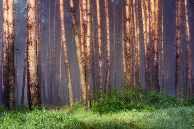 туман, пейзаж, лес, утро, fog, landscape, forest, morning Туманное утро на опушке лесаphoto preview