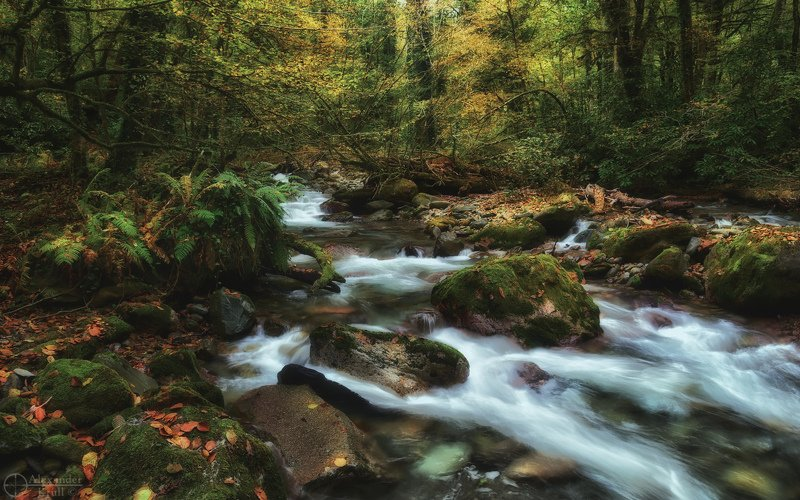 В ноябрьских джунглях Кавказа...photo preview