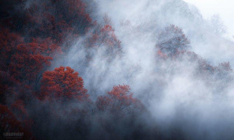 лес, туман, крым, буковый лес, осень, демерджи Осенний пожар фото превью