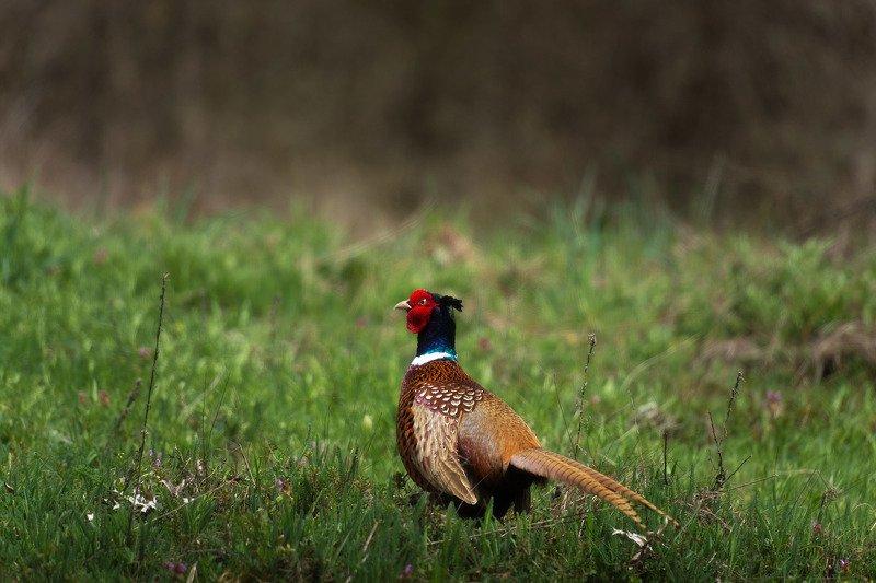 Каждый охотник желает знать, где сидит...photo preview