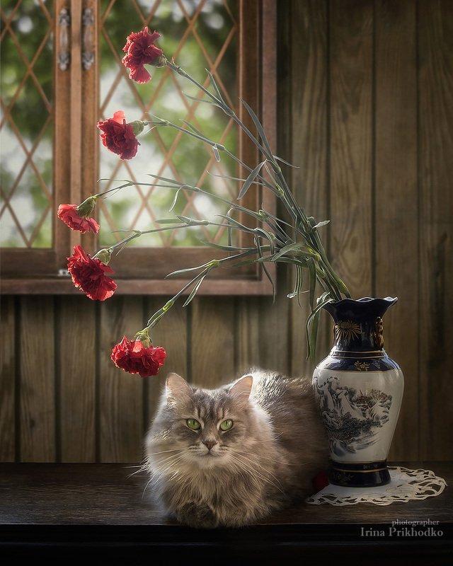 натюрморт, котонатюрморт, кошка масяня, цветы, гвоздики Масяня навсегда фото превью