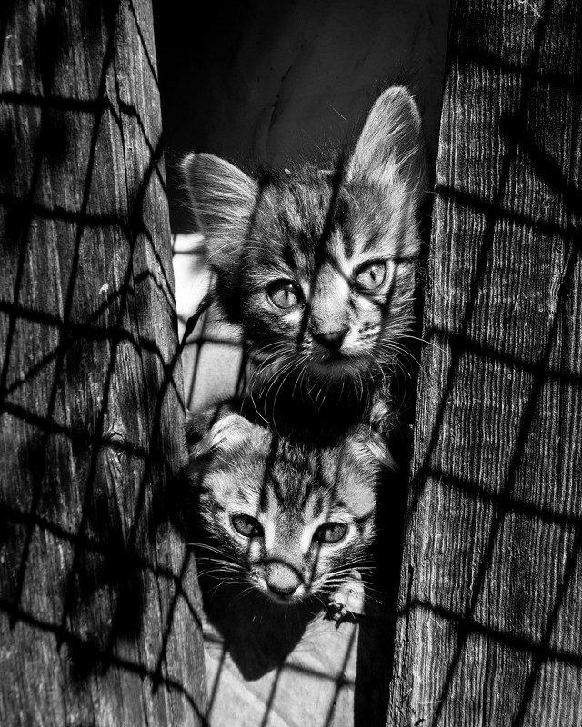 Котяты фото превью