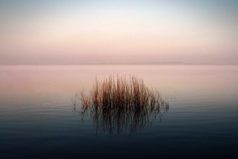 gomel belarus река беларусь гомель Лёгкая небритость фото превью