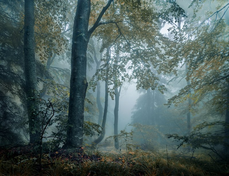 landscape nature scenery forest wood  mist misty fog foggy longexposure mountain vitosha bulgaria туман лес In the woodphoto preview