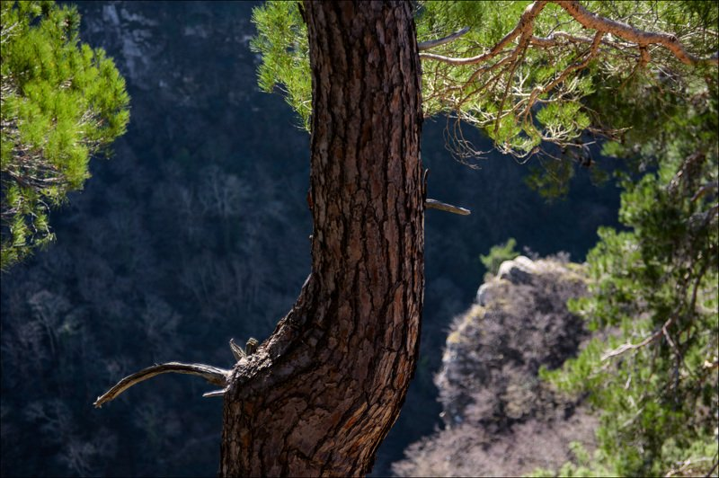 В Сочинских лесах на восьмое марта.photo preview