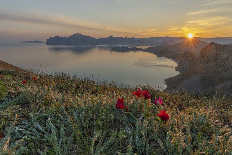 Фототуры с Владимиром Рябковым, Крым, тюльпаны. Тюльпаны Крыма.photo preview