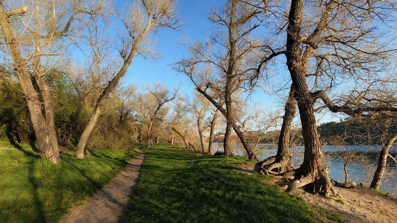 весна,вечер,дорога,зелень,деревья,пейзаж,природа Вечер...photo preview