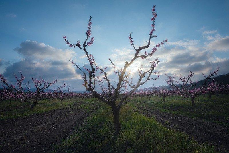 И снова персики.photo preview
