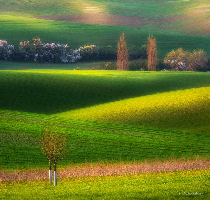 пейзаж, моравия, весна Moravian spring... фото превью