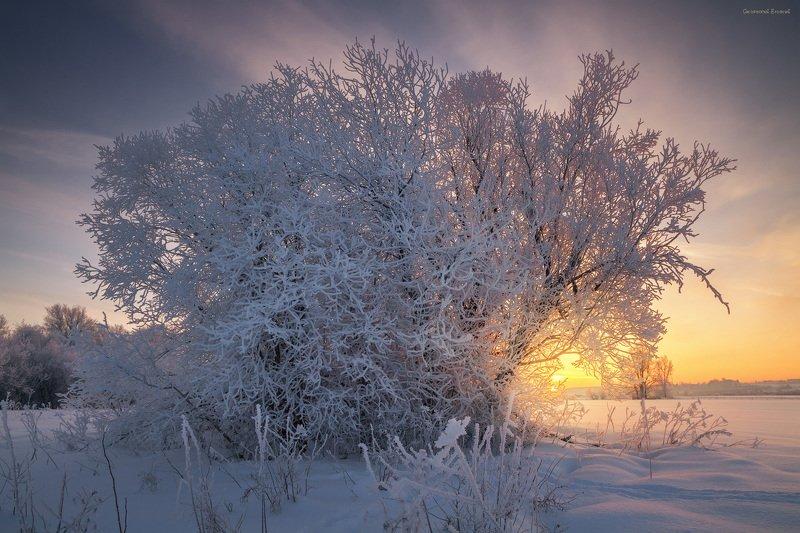 зима, иней, снег, куст, мороз, вечер, закат, поле В одеждах из инеяphoto preview
