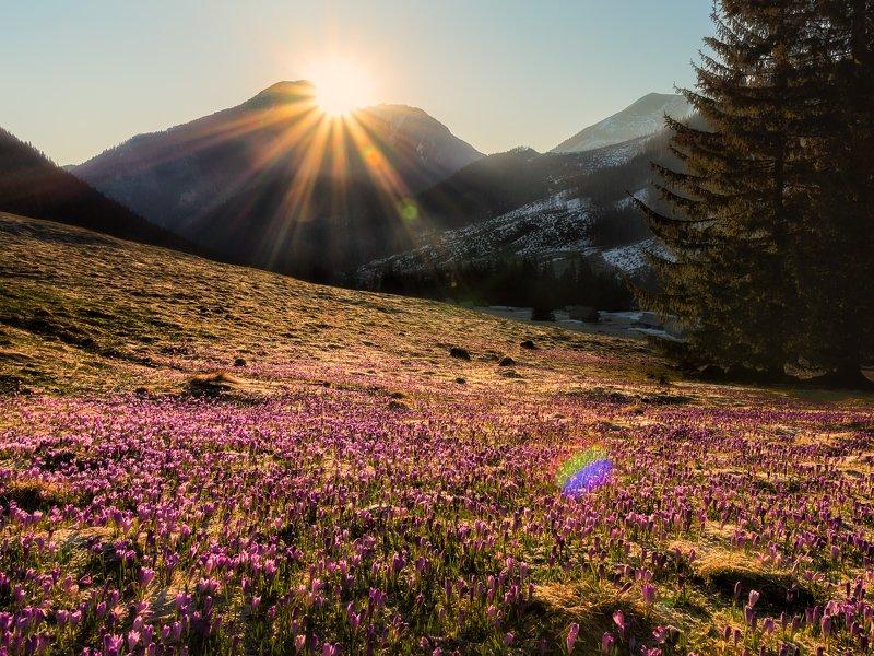 sunrise,morning,tatras,poland,mountains,flowers Sunrise in Tatra Mountainsphoto preview