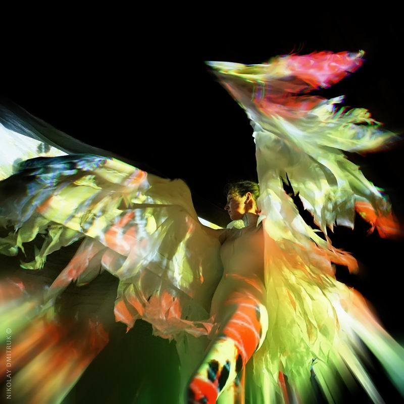 портрет птица. солнце Маориphoto preview