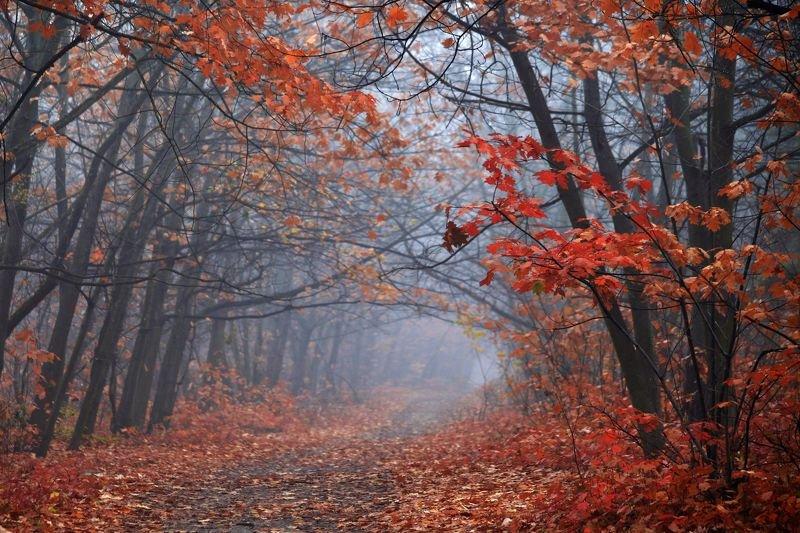 Осенняя дубраваphoto preview