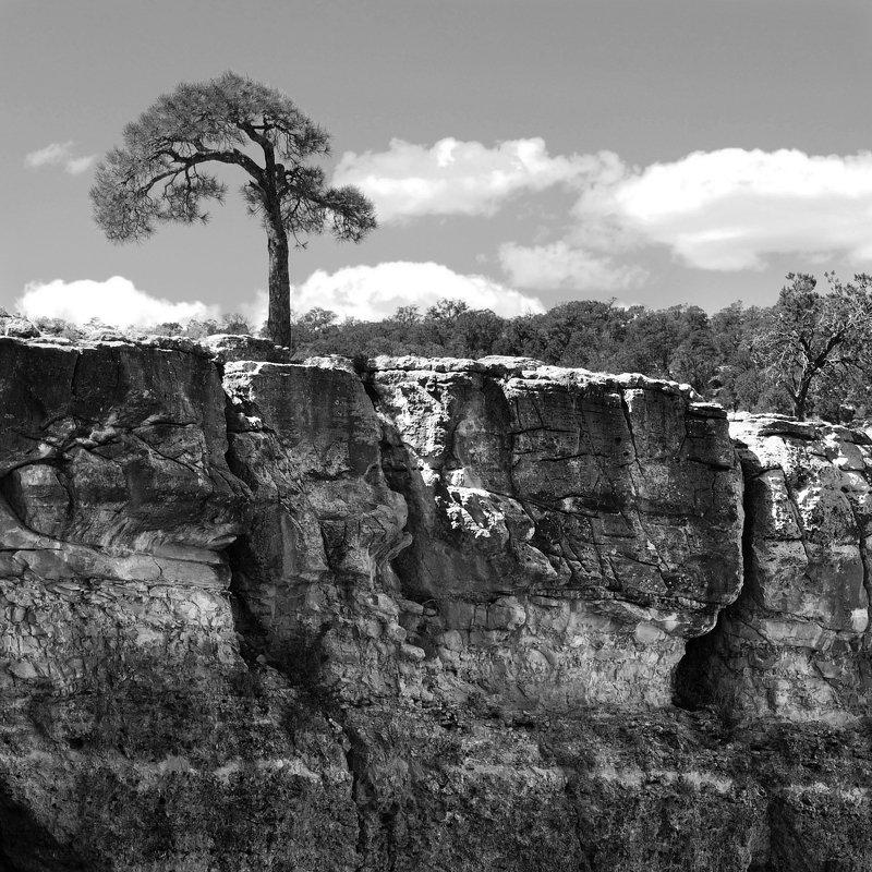 ч/б перспектива природные абстракцииphoto preview