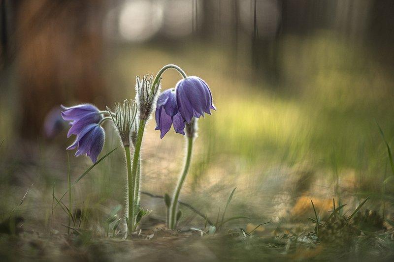сон трава, свет, цвет, весна, апрель, маклок, воронеж, геннадий мещеряков Сны цветные бережно хранят...photo preview