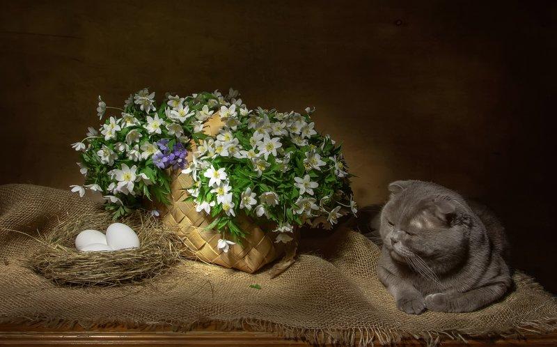 натюрморт, ветреница, весна, вербное воскресенье, верба, лукошко, кот, скоттиш-фолд, яйца Светлого вербного воскресенья!photo preview