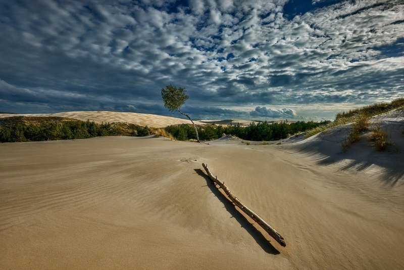 dune, sand, laandscape, skay, poland, leba, park On the Dunephoto preview