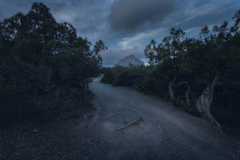 Можжевеловая роща, Новый свет.photo preview