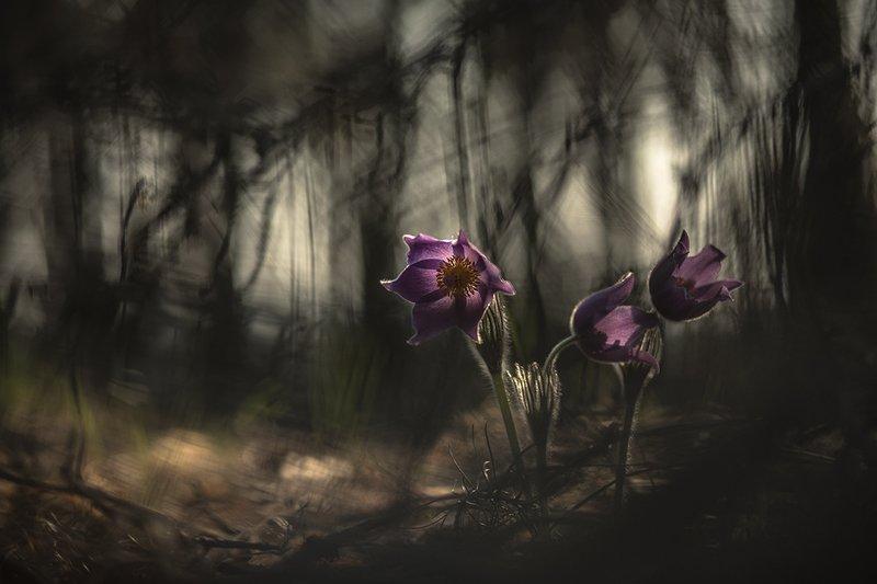 сон трава, свет, цвет, весна, апрель, маклок, воронеж, геннадий мещеряков Тревожные сны...photo preview